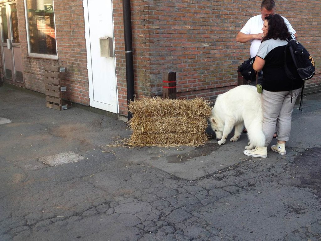 europejska wystawa psów