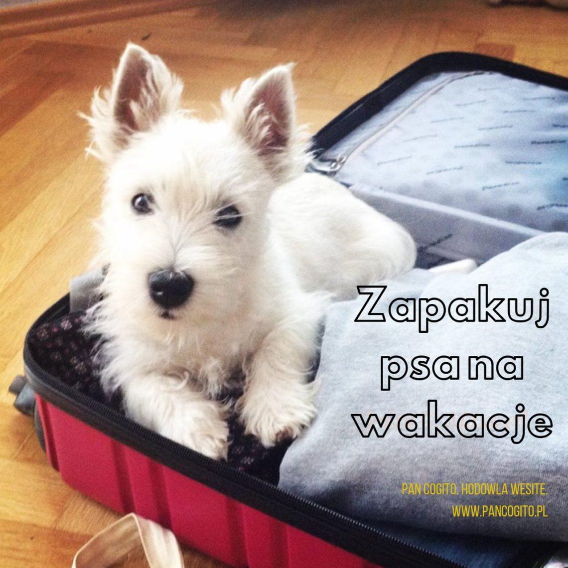 wyjazd z psem na wakacje